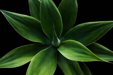 Classical look at a plant in color