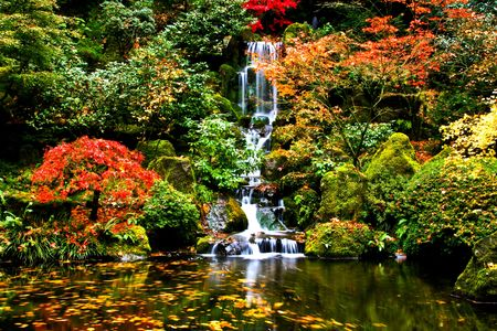 trees photography: A small waterfall in a japanese garden in fall small waterfall in a japanese garden in fall Stock Photo