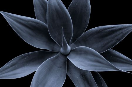 Classical look at a generic plant