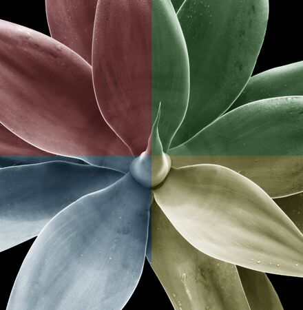 Multicolor look at a generic plant Stock Photo