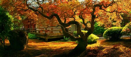 A tree in a Japanese garden in Fall