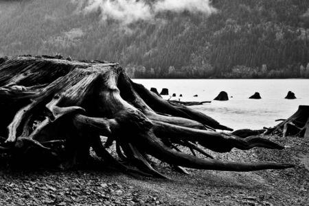Lake Stump Stock fotó