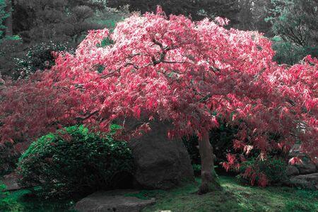 Jardín japonés  Foto de archivo - 6980091