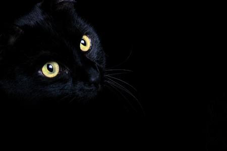 Een zwarte kat gevangen tegen een zwarte achtergrond Stockfoto