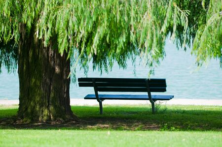 Weeping Willow tree and bench by the side of a lake.