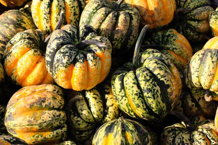bushel: A group of pumpkins in a holiday bushel.
