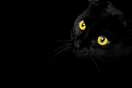 A black cat captured against a black background Stock Photo