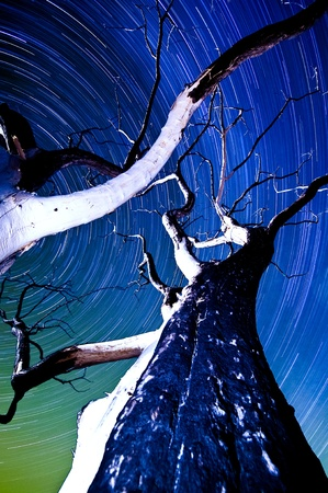 One hour sections of light and star trails over old dry trees. Stock Photo - 11505984