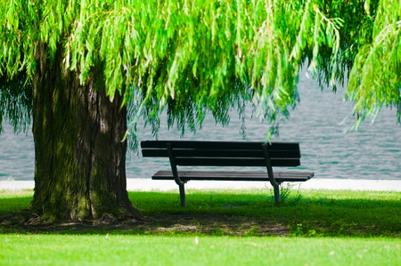 A park bench in shadow underneath a weeping willow tree.