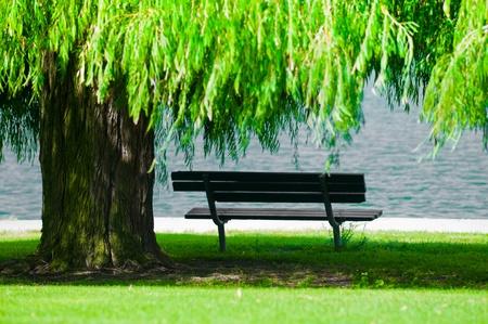 sauce: Un banco del parque a la sombra debajo de un sauce llorón. Foto de archivo
