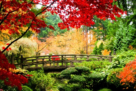 garden pond: A bridge in an Asian garden during Fall season.