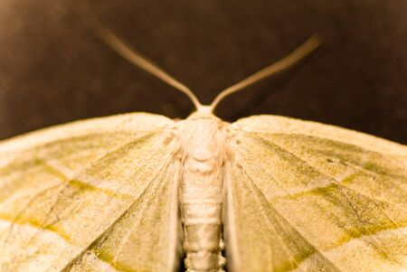A moth at rest with its wings spread out for balance. Stock Photo - 11507288