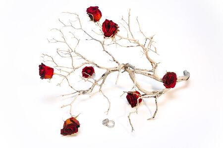 Droge rode rozen op een uitgedroogde tak met trouwringen, geschoten in een indoor setting.