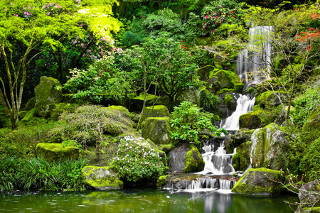 arboretum: Small waterfall flowing into a koi pond in a Japanese garden