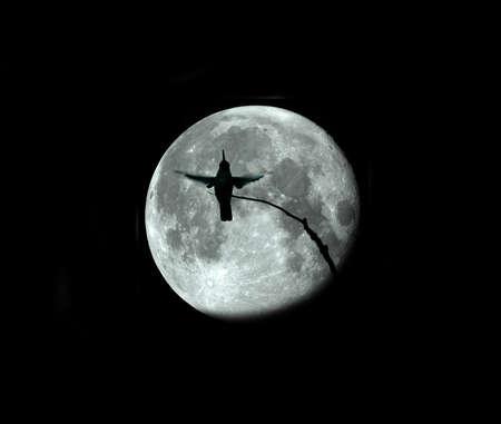 飛行中のハチドリのプロフィールの写真