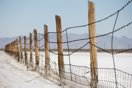 Barbed wire was the first wire technology capable of restraining cattle. Stock Photo