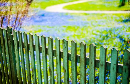 wood agricultural: Picket fence and a footpath in a garden filled with Blue Wildflowers.