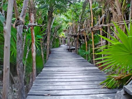 foot path: An elevated wooden foot path winding its way through the jungle of Tulum, which is a resort town on Mexico�s Caribbean coast, around 130 km south of Canc�n.