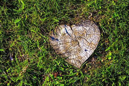 wood agricultural: The cut stump of a tree shaped like a wooden heart.