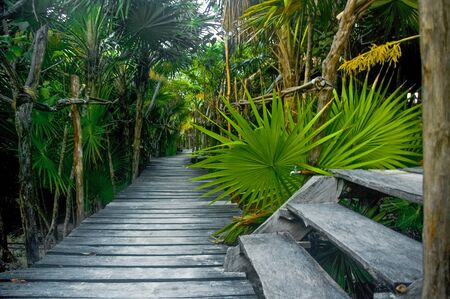 An elevated wooden foot path winding its way through the jungle of Tulum, which is a resort town on Mexico�s Caribbean coast, around 130 km south of Canc�n.