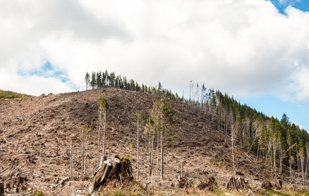 evident: Evident deforestation in the Cascades mountain range of Oregon. Stock Photo