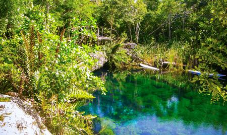 A cenote in the Punta Allen area of Mexico.