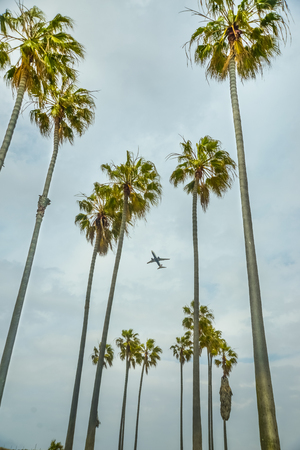 Airplane on take off passing behind a group of palm trees. Imagens