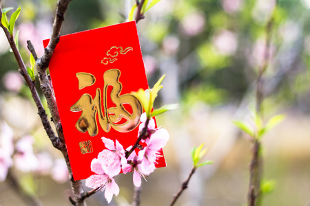red packet: red packet on the tree