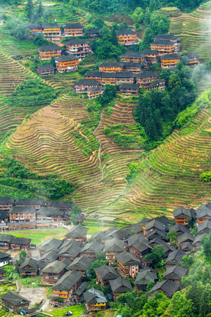 terraced field: Longsheng terraced field scenery