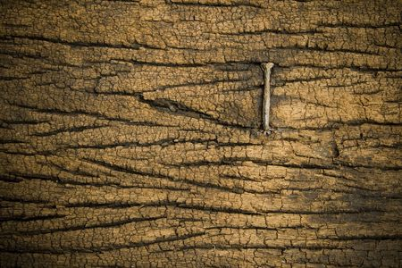 split rail: a nail on wood