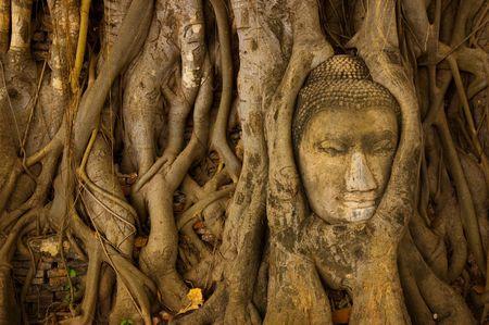 cabeza de buda: ruina de la cobertura de cabeza de Buda por la ra�z del �rbol en Ayutthaya