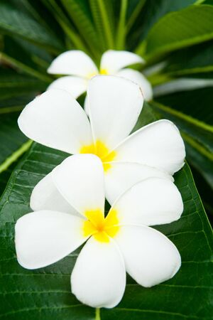 3 of lan thom flowers Stock Photo - 7696361