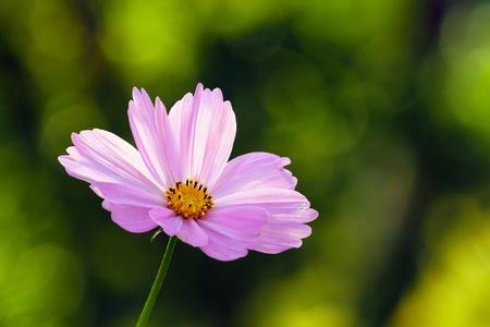 Mari gold flower.