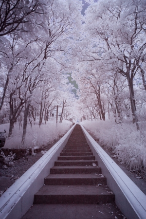 Infrared Landscape Stock Photo - 13897760