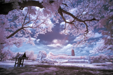 Infrared Landscape photo