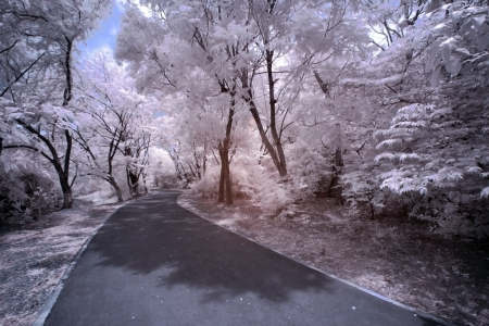 Infrared Landscape Stock Photo - 13897745
