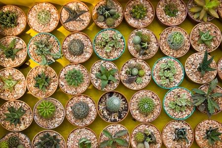 cactus species: Especies de cactus