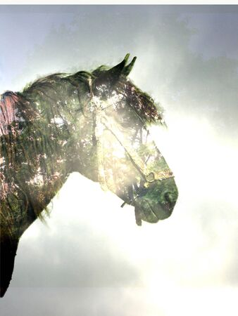 horse in the magic forest Stock Photo