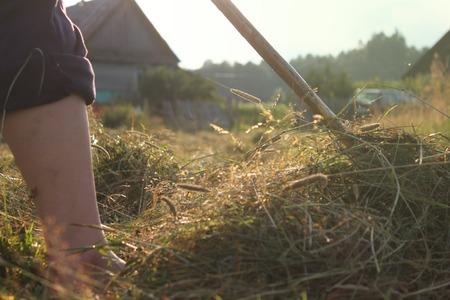 녹색 농가와 경사면, 훌륭한 계획