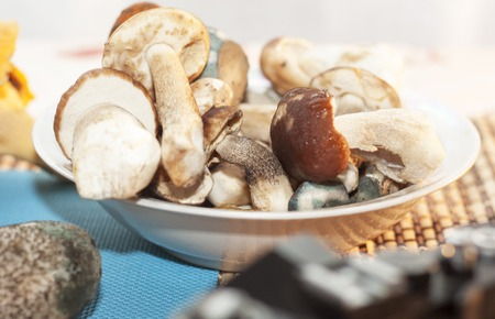 photography of autumn harvest of forest mushrooms