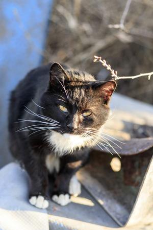 cortile di strada. gatto nero con macchie bianche. non graffiato e disordinato. profondità di taglio ridotta