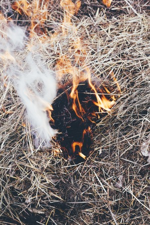 dry grass near the forest. the forests are burning. fire hazard. have toning.