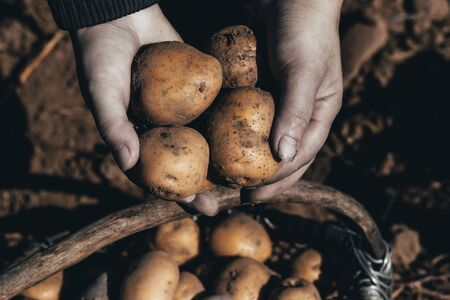 street lighting. the ground under your feet. A man holds potatoes in his hands. Archivio Fotografico - 129922769