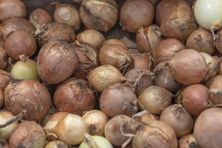 small shop. onions are on display. close-up