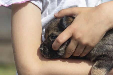 little girl holding a little puppy in her arms. close-up Stock Photo