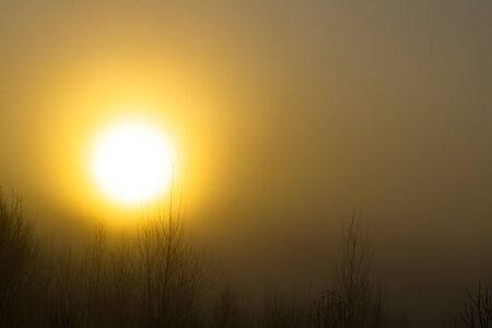 Soft focus. Early morning. The sun is very bright. Very thick and heavy fog.