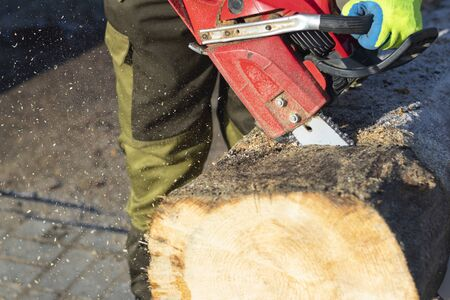 man sawing a big tree with a chainsaw. Sawdust. Close-up.