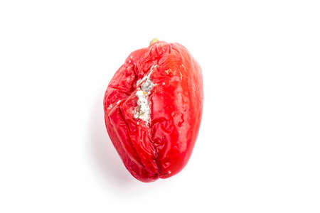studio lighting. red pepper covered with mold. It has rotted or deteriorated Archivio Fotografico
