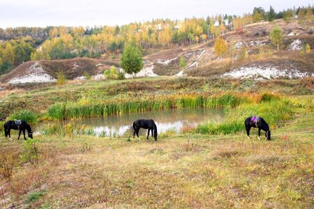 rein: Three horses on a meadow near lake