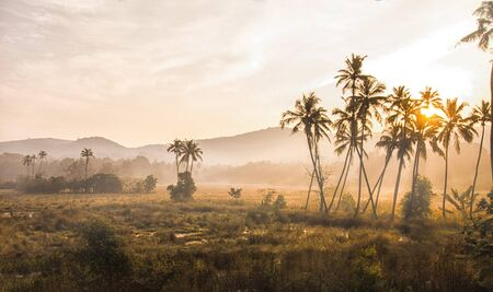 foggy morning in the Indian jungle, the sun shines through palm trees